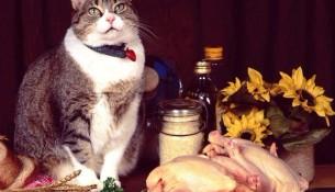 Особенности выбора корма для кошек