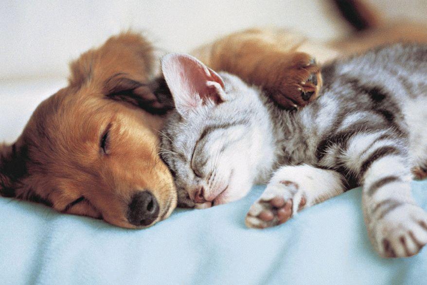 игры щенки и котята