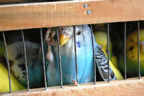 «Свободу попугаям!»