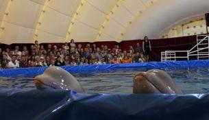 Дельфинарий - впервые в Пинске с 24 марта по 19 апреля