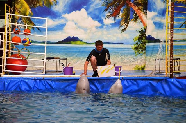 Дельфинарий в Пинске