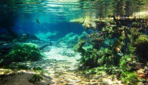 самое большое болото Пантанал