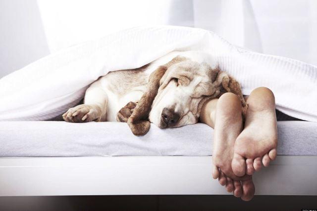 Ученые рассказали, как похудеть во сне