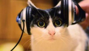 В Лондоне выпущен первый в мире музыкальный альбом для кошек
