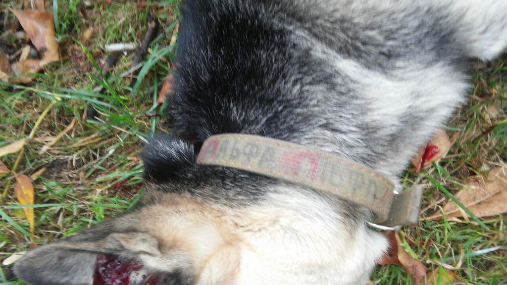 милиционер застрелил собаку