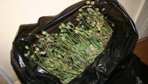 В Пинском районе задержали минчанина с двумя тоннами маковой соломки
