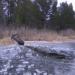 спасли провалившегося под лед лося