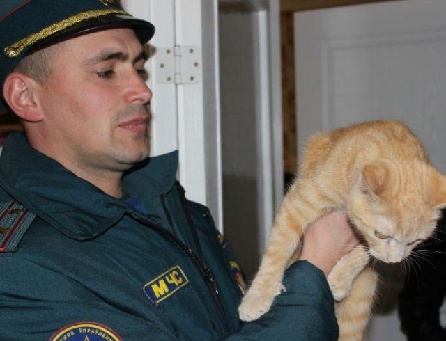 Спасатели МЧС в Бресте спасли кошку из вентиляционной шахты