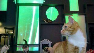 В Петербурге создали первое в России световое шоу для котов