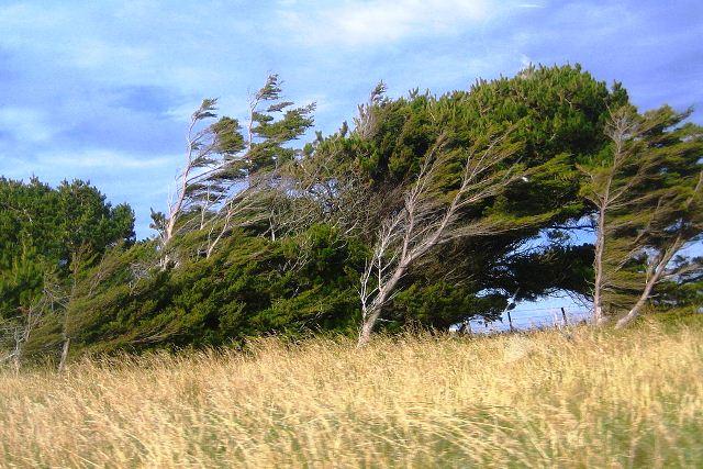 +35°C и сильный ветер: Пинский лесхоз просит жителей города и района воздержаться от посещения лесов