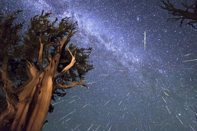 звездопад года - фото