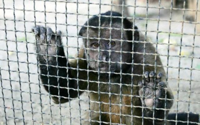 зоопарки нужно запретить