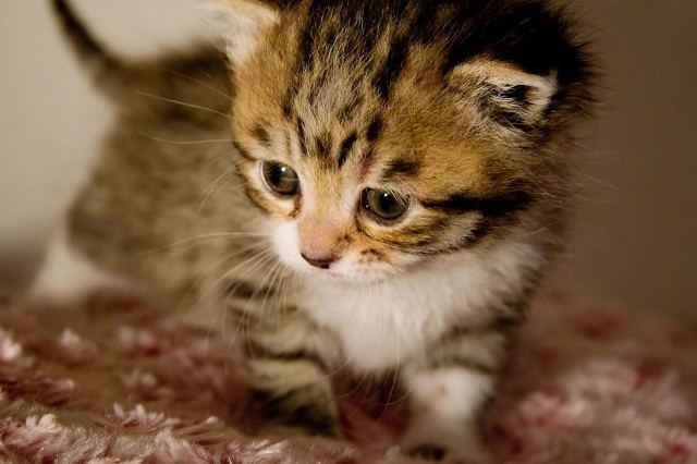 Котенок в доме: что учесть, если вы решили завести питомца