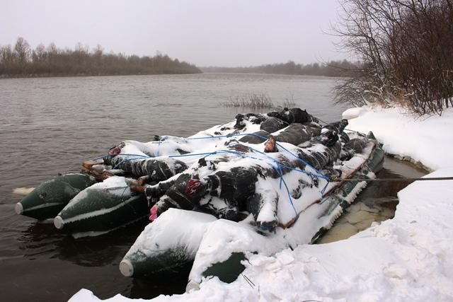 Пинские пограничники предотвратили контрабанду 38 мешков мяса и 39 туш телятины из Украины - фото