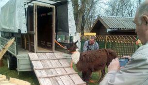 Зооуголок в городском парке Пинска ликвидируют - фото