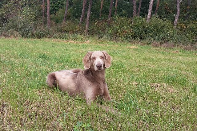 Охотничья собака - фото