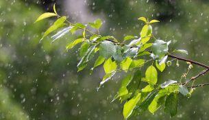 Дерево под дождем - фото