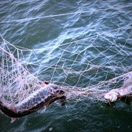 рыбалка с сетями на Погосте - фото