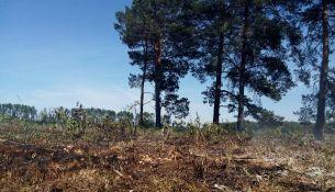 В Беларуси вводят запрет на посещение лесов - фото