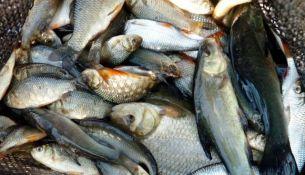 браконьеру из Пинска грозит крупный штраф и тюремный срок - фото