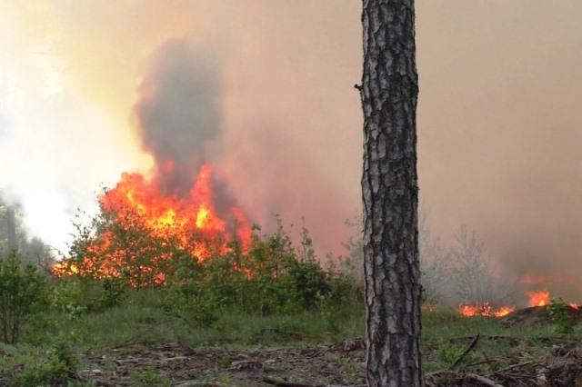 Пожар в Чернобыльской зоне - фото
