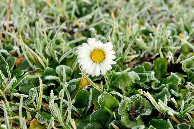 Заморозки на почве - фото