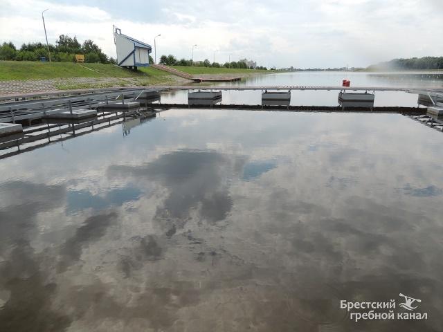 В Бресте на Гребном канале завелись медузы - фото