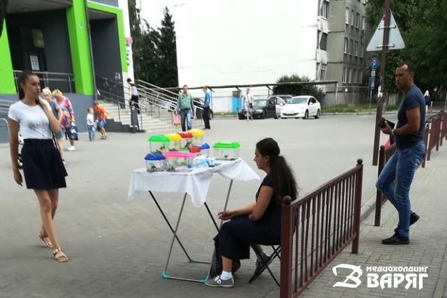 В Пинске продают черепах возле магазинов: законно ли это? - фото