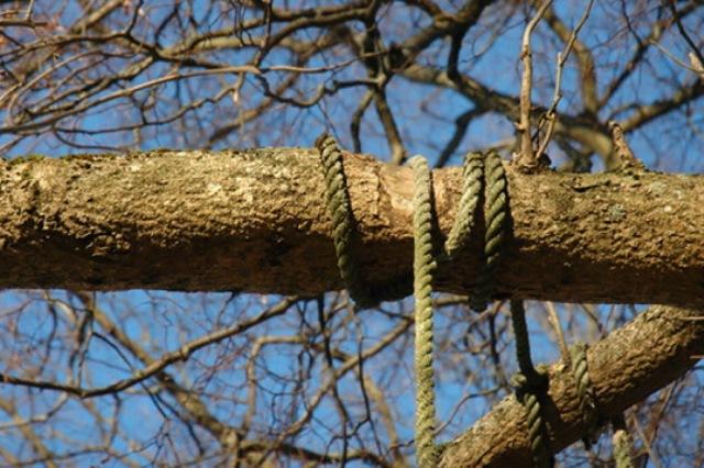 Двое мужчин повесили щенка хаски на дереве - фото