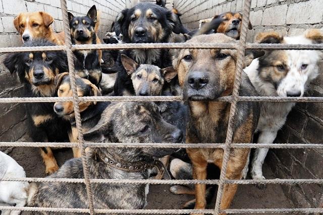 Отлов и содержание бездомных животных в Пинске - фото