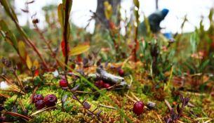 В лесу во время сбора клюквы жители Столинщины нашли скелет человека - фото