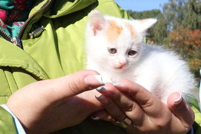 Котенок - фото