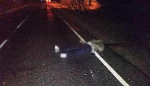 переехала лежавшего на дороге - фото