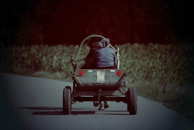 В Пинском районе ГАИ усилит контроль за гужевыми повозками - фото