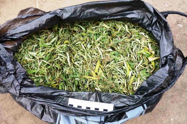 полкилограмма марихуаны, Тунеядца с 2 килограммами марихуаны - фото