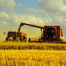 Как эффективно собирать урожай - фото