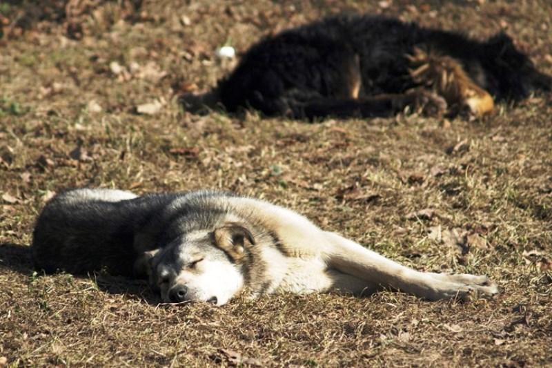 подозревают в убийстве пяти собак - фото