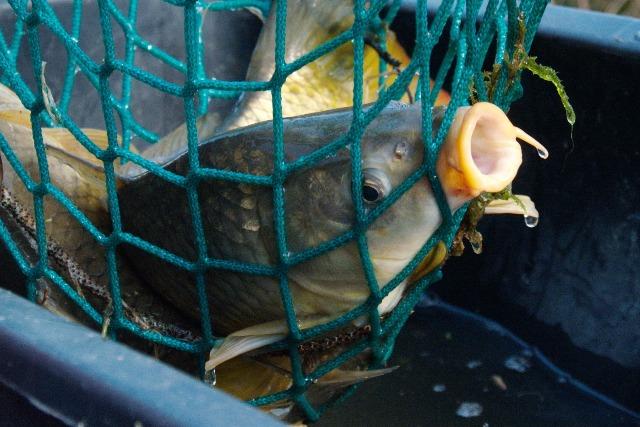 Рыба в сетях - фото