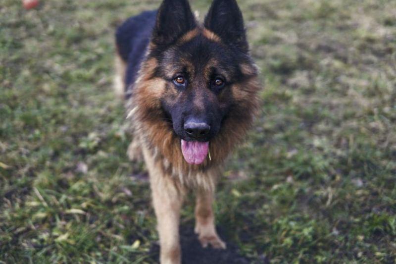собака помогла поймать воров - фото