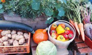 Где и как можно продавать продукцию со своего огорода в Пинске - фото