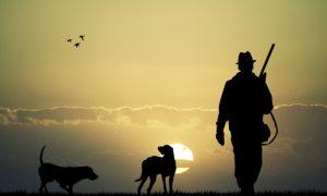 нарушения в сфере охоты - фото