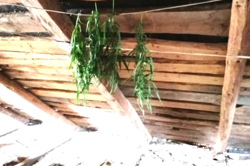 хранил марихуану на чердаке отцовского дома - фото