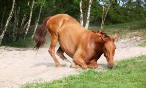 лошадь заболела сибирской язвой - фото