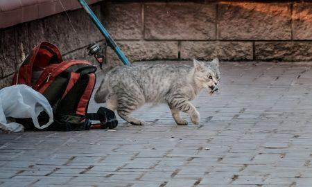 кот-воришка - фото Александр Шатохин