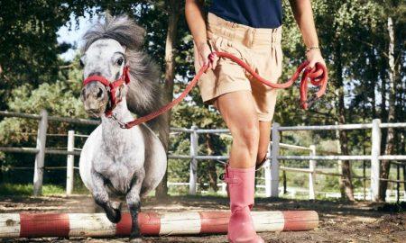 Самый маленький конь в мире - фото