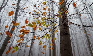 Лес - фото
