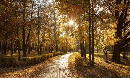 Осень в парке - фото