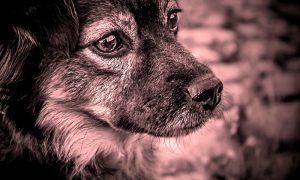 забил до смерти собаку - фото