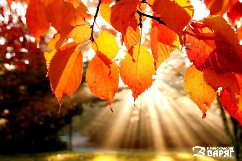 осень, октябрь, температурные рекорды - фото