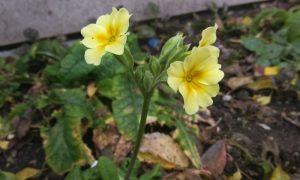 В Пинске расцвели цветы - фото